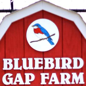 bluebird gap farm