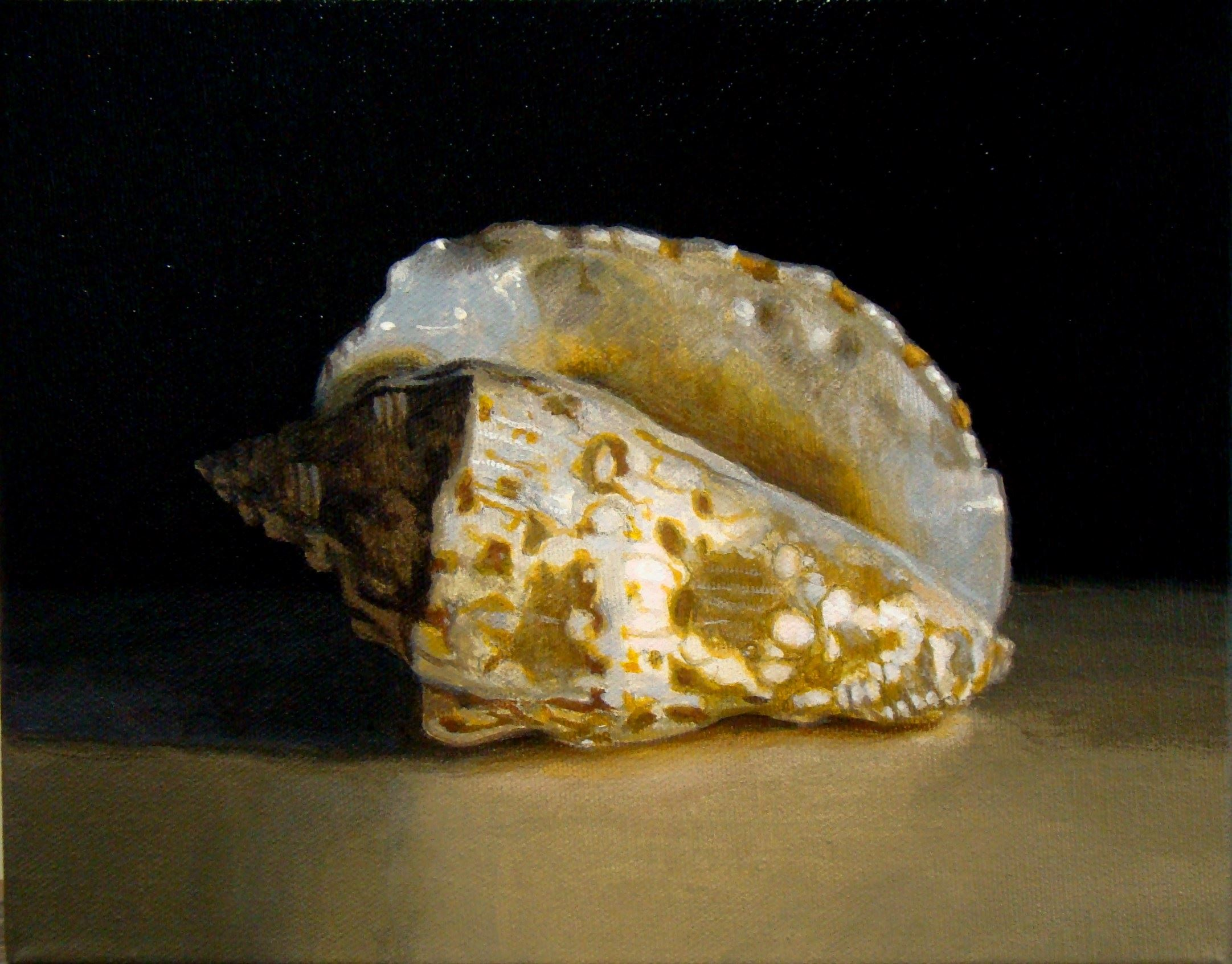 Shell IV by James Warwick Jones at The Charles H. Taylor Visual Arts Center